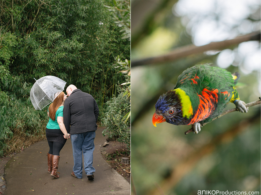 portland-zoo-engagement-photos12